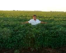 Alquilo 580 Has para Agricultura o Ganadería.