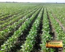 Entre Rios Concepcion del Uruguay 63% Agricola-37% Ganadero
