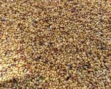 Venta de Semilla y Fardo de Alfalfa SGO del Estero Productor