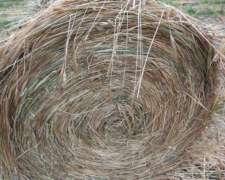Rollos Medianos Alfalfa Consociada // 300kgs