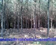 Vendo Campo Forestal en Misiones
