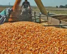 Maiz Vendo a 5.700 Colocado Hasta 300 km