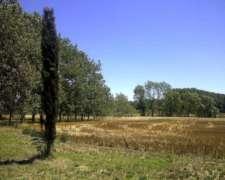 50 Has Campo Agrícola con Mejoras en Carlos Keen