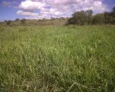Campo Mixto San Luis