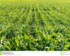 Vendo 25 Has100% Agricolas a 15 km de Lobos - Buenos Aires