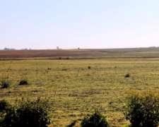 Venta de Campo Agricola 440 Has Gualeguay, Entre Ríos