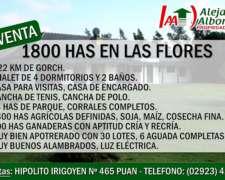 Alejandra Albornoz Vende en las Flores