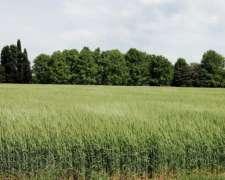 500 Has. Agrícola. en Zona Norte BS. AS.
