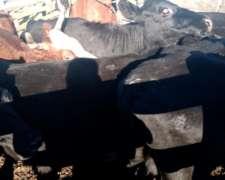 Vacas Vacas Vacas Entre Ríos