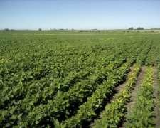 1000 Has Agricolas En Gualeguaychu