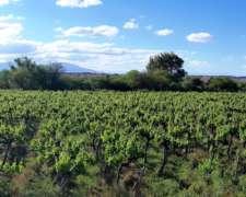 50 Hectáreas Finca Campo Cultivo Vid Frutic Ganader Agric