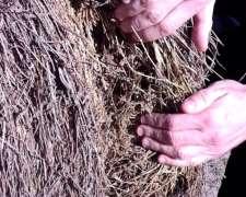 Rollos de Alfalfa Mezcla con Gramilla