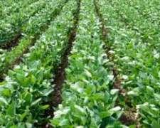 29ha 100% Agricola, Fighiera(prov.santa FE)