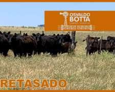 Retasado: 250 Hectáreas en las Flores, Buenos Aires
