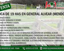 19 Has de Finca en General Alvear Mendoza