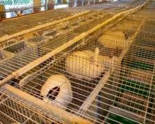 Jaulas Para Conejos Le Clapier