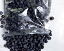 500 Kg De Arándanos De Exportación Congelados
