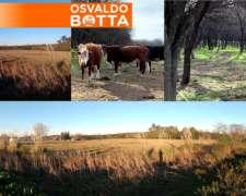 475 Hectareas en Santa Rosa, la Pampa