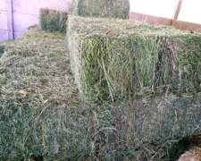 6heno, Fardos de Alfalfa o Pastura Reigrass