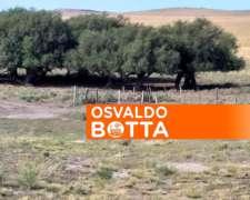 Oferta Increíble: 64 Hectáreas en General Acha, la Pampa