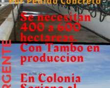Por Pedido Concretos - Necesitamos Campos en Uruguay