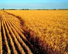 1000 Has ,agrícola 100 X 100 en Darregueira