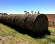 Rollos Grandes de Pastura con Alfalfa