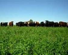 Campo Apto Ganadería/agricultura en Mariano Saavedra