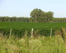Campo Mixto En Las Flores A 165km De Bs As U$s580000.-