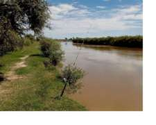 810 HAS Ganaderas Pellegrini - SGO Estero - Agua Todo el AÑO