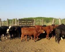 50 Terneros Machos-hembras 190-200 Kg