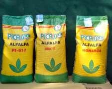 Alfalfa Picasso 617 (grupo 6) - Semillas