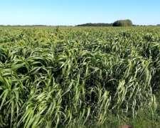 760 Ha en Chascomús. 75% Agrícolas
