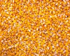 Compro Maiz En Cualquier Estado Precio A Convenir