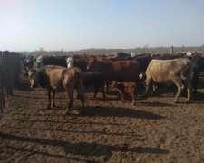 Campo para Capitalizacion Vacas Preñadas
