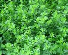 Fardos De Alfalfa Exelente Calidad