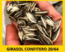 Girasol Confitero Calibre 20/64