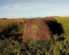 Rollos Alfalfa Pura Grandes - 35 En Total