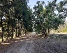 Vendo Campo a 300 Mts Ruta 9