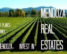 Excelente Campo en San Rafael- Mendoza