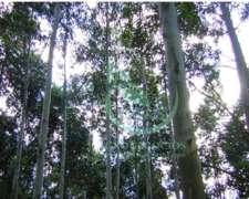 5063 Hectáreas Forestales - Uruguay