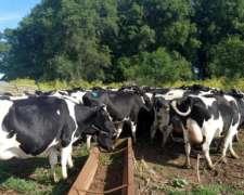 Busco Tambo/vacas en Ordene/secas/vaq.