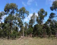 50 Has. Forestal- Colonia la Argentina ER.