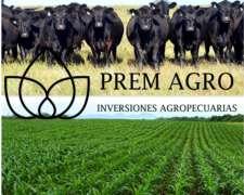 Inversiones Ganaderas Y Agricolas