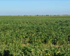 120 Has Santa FE. Zona Cercana Casilda . Agrícola 100%
