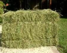 Fardos de Alfalfa Colonia Dora Sgo. del Estero Productor
