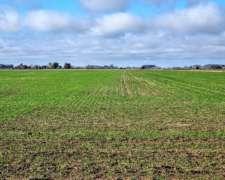 Ba2964 Agricola 50 Has Open Door Lujan