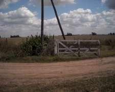Pergamino Dueño Vende 49 Ha Agricolas
