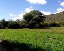 Campo en Alquiler Solo para Apicultura, Colmenas, Excelente