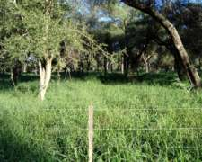 2.600 Has., J.j. Castelli, Chaco